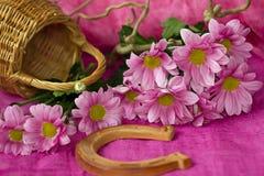 Crisantemo rosado fotos de archivo