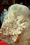 Crisantemo sulla pietra Fotografia Stock