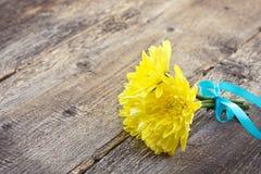 Crisantemos amarillos Foto de archivo libre de regalías