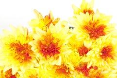 Crisantemos amarillos aislados en blanco imagen de archivo