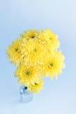 Crisantemos amarillos en un fondo blanco fotografía de archivo