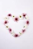 Crisantemos apacibles en la forma de corazón Fotografía de archivo libre de regalías