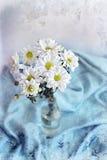 Crisantemos de las flores blancas en fondo de la manta azul imágenes de archivo libres de regalías
