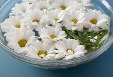 Crisantemos en agua Imagenes de archivo