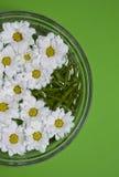 Crisantemos en agua Imagen de archivo
