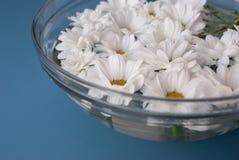 Crisantemos en agua Imágenes de archivo libres de regalías