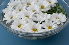 Crisantemos en agua Foto de archivo
