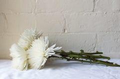 Crisantemos en la tabla Imagen de archivo libre de regalías