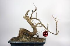 Crisis Christmas Tree Royalty Free Stock Photo