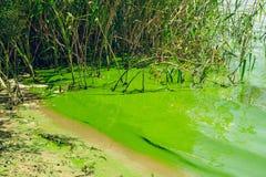 Crisis ecológica Río cenagoso foto de archivo