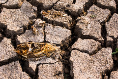 Crisis muerta del calentamiento del planeta de la tierra seca de los pescados foto de archivo libre de regalías