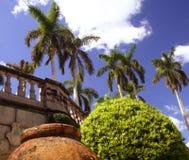 Crisol, árbol y palmas Foto de archivo libre de regalías