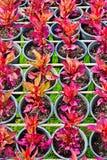 Crisol de flores Imagen de archivo
