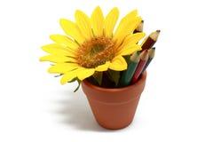 Crisol, lápices y flor Imágenes de archivo libres de regalías