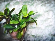 Crisol verde foto de archivo libre de regalías