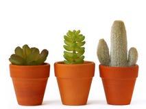 Crisoles de cactus Imagen de archivo libre de regalías