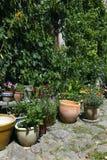Crisoles de flor del jardín Fotos de archivo libres de regalías