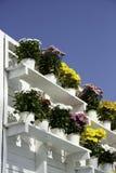 Crisoles de flores Fotografía de archivo libre de regalías
