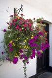 Crisoles de la planta con la petunia Foto de archivo libre de regalías