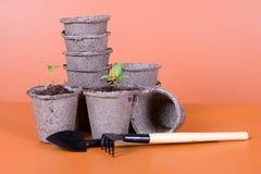 Crisoles de la turba, plantas de semillero y herramientas de jardín Fotografía de archivo libre de regalías