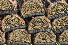 Crisoles de langosta Fotos de archivo