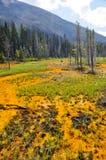Crisoles de pintura en el parque nacional de Kootenay, Canadá Imagen de archivo
