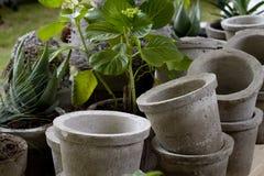 Crisoles y plantas Foto de archivo libre de regalías