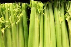 Crisp Celery Stock Images
