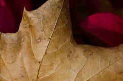 Crisp Dried Leaf in Autumn Stock Photo