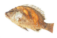 Crisp fried Tilapia fish Royalty Free Stock Images