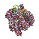 CRISPR/Cas9 πρωτεϊνικό πρότυπο διανυσματική απεικόνιση