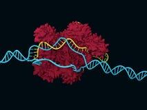 CRISPR-Cas9 иллюстрация вектора