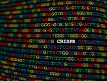 CRISPR-Ort auf DNA-Sequenz vektor abbildung