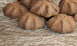 Chocolate shortbread cookie. delicious shortbread cookies with cocoa. Crispy chocolate shortbread cookie. delicious shortbread cookies with cocoa Royalty Free Stock Image