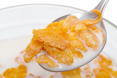 Crispy corn flakes with milk Royalty Free Stock Photos