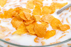 Crispy corn flakes with milk  close-up Stock Photos