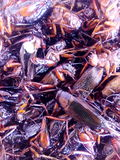 Crispy Critters insekty Zdjęcia Royalty Free