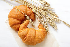 Crispy French croissant with spikelets of wheat Royalty Free Stock Images