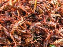 Crispy fried bombay locust. Mix salt and wild lime leaf Stock Photos