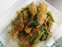 Crispy fried fish stir with celery leaves served with rice royalty free stock photo