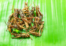 Crispy Fried insects on  banana leaf Stock Photo