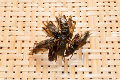 Crispy fried insects on basketwork background Royalty Free Stock Image