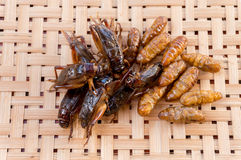 Crispy fried insects on basketwork background Stock Image
