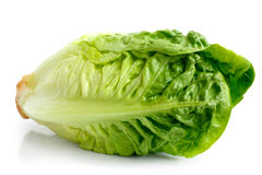 Crispy gem lettuce. Single gem lettuce isolated on white background Royalty Free Stock Photography