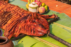 Crispy grilled suckling pig Royalty Free Stock Images