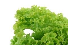 Crispy lettuce on white Royalty Free Stock Photos