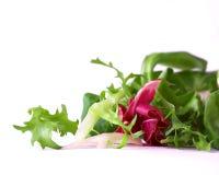 Crispy Salad Royalty Free Stock Photo