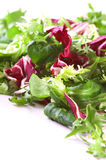 Crispy Salad Royalty Free Stock Image