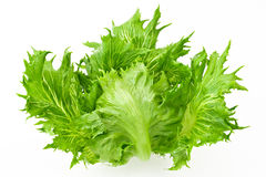 Crispy salad. Isolated in white background Royalty Free Stock Photography
