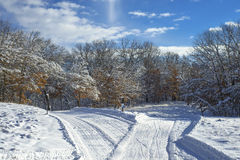 Criss crossing cross country ski trails Royalty Free Stock Photography